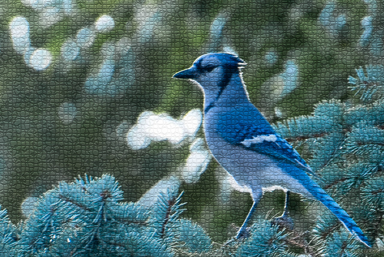 Blue-Jay-Tiled-For-Fun-